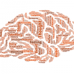 brain-544403_960_720